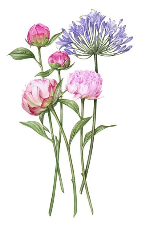billy showells botanical painting bing images of flower portraits watercolor by billy showell billy showell ba sba one stroke