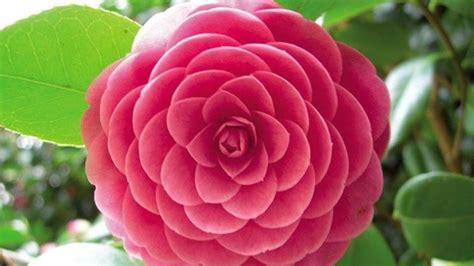bello Giardino In Ombra #1: fiori-invernali-da-balcone_NG1.jpg