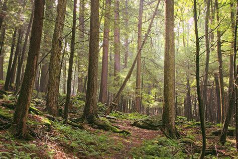 forrest woodworker forrest h dutlinger area revisit 9