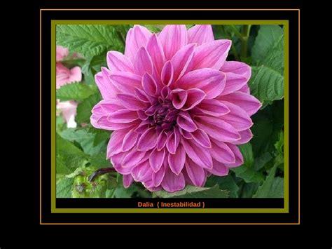 imagenes flores y nombres las flores y el significado de sus nombres ii parte