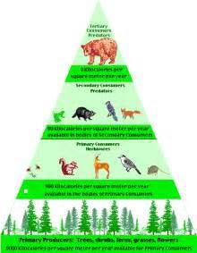 3h biomes rainforest 2