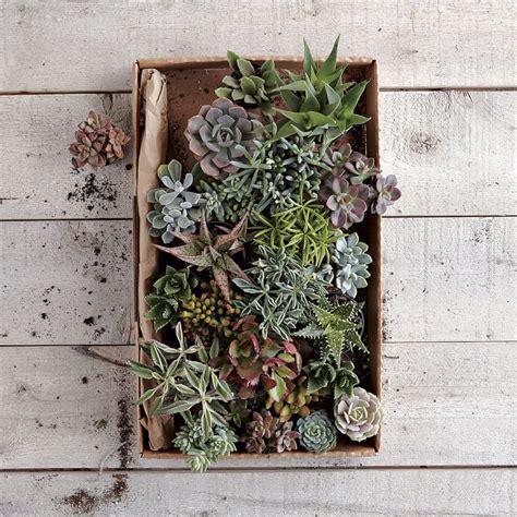 concrete succulent planter concrete succulent planter halfway wholeistic