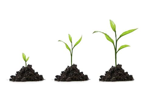 grow tree when is the best time to start an seo caign