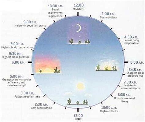 Rhythm Si ghidul de sanatate ritmul circadian si ceasul biologic