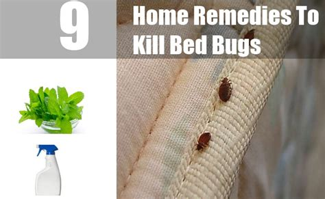 9 home remedies to kill bed bugs treatments