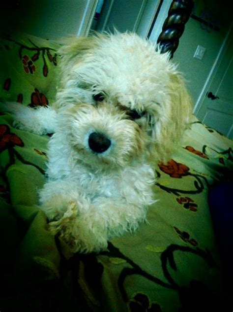 Barks Bed And Biscuit by Bark Biscuit And Bed Pet Sitting Service San Antonio