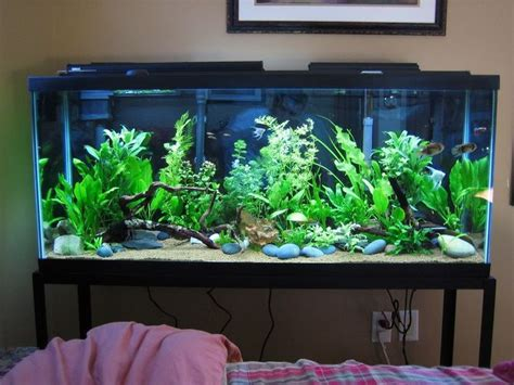 lighting for 55 gallon planted tank planted 55 gallon the planted tank