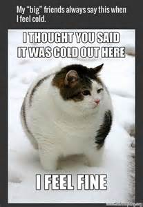 Funny Fat Cat Memes - funny pictures of fat dogs and cats car memes funny