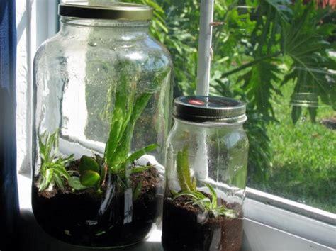 diy how to make a terrarium in a recycled glass jar inhabitat green design innovation