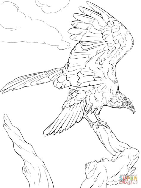 realistic turkey vulture coloring page free printable