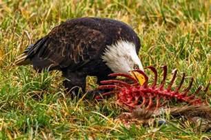 What Do Backyard Birds Eat What Do Birds Eat Bird Eating Habits Amp Diets