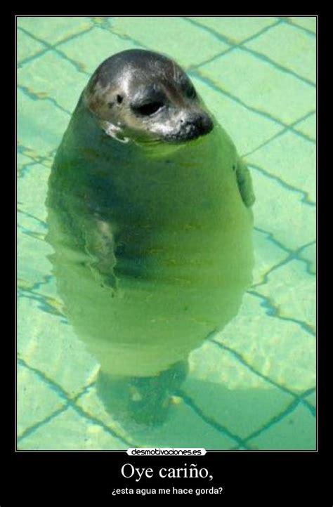 imagenes de focas blancas im 225 genes y carteles de foca pag 3 desmotivaciones