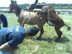 Horse mating donkey biology 10 loraandrew title wild horse mating