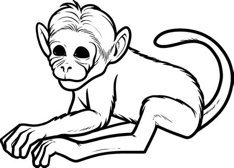 printable coloring pages monkey quest coloring pages of monkeys printable activity shelter