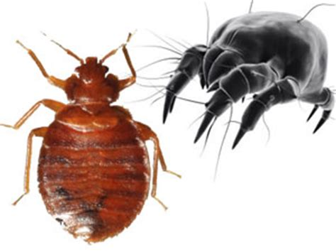 dust mites vs bed bugs dust mite proof covers vs bed bug covers