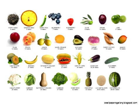 8 fruits name fruit names list wallpapers gallery