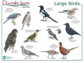 bird identification music search engine at search com