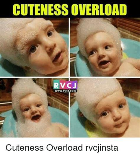 Cute Overload Meme - 25 best memes about cuteness overload cuteness overload