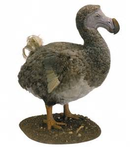 dodo birds weren t dodos after all