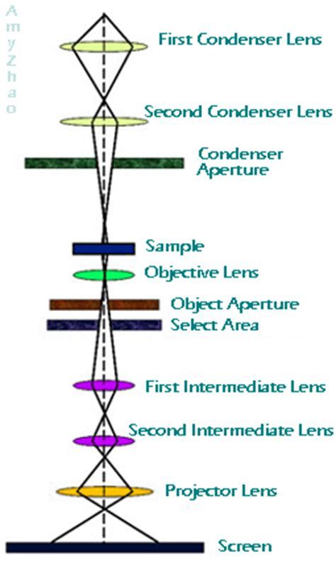 diagram of scanning electron microscope scanning electron microscope diagram scanning free