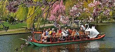 swan boat season in boston swan boat rides in boston public garden north shore kid