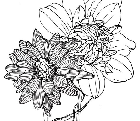 Line Flower line drawing flowers dahlias flower power