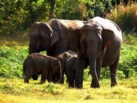 best tours in sri lanka sri lanka wildlife tours sri lanka wildlife safari tours