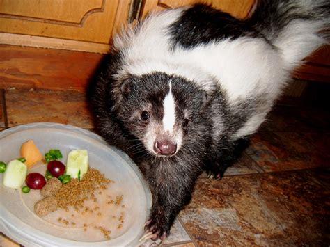 derecho tornado story or damn dog pet skunks for sale