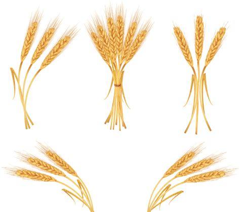 wheat clip wheat border clip www imgkid the image kid has it