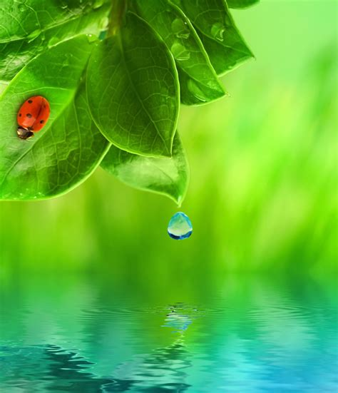 Leaf Daun Paper Flower Isi 12 Pcs 图片素材 树叶上水珠滴落水中 泛起波澜