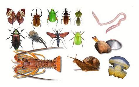 imagenes animales invertebrados c 243 mo son los animales invertebrados 4 pasos uncomo