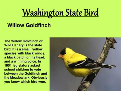 washington state bird facts ppt washington state facts and symbols powerpoint presentation id 1474289