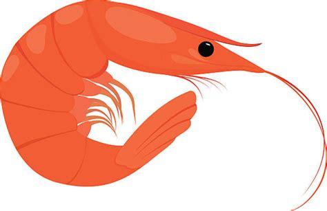 shrimp clip royalty free prawns clip vector images
