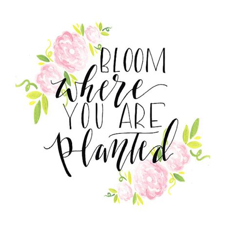 flower design quotes bloom where you are planted print flowers leaves