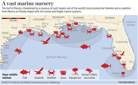 maps understanding the bp spill in the gulf of
