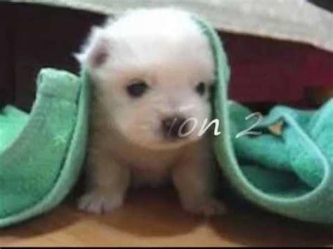 imagenes animales mas tiernos los perritos m 225 s tiernos del mundo por posici 243 n youtube