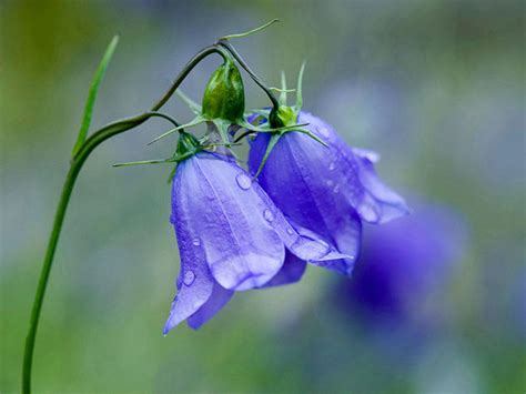 immagini di ci di fiori immagini di fiori donna moderna