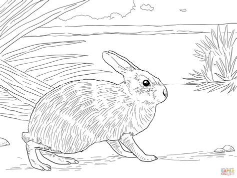 cottontail rabbit coloring page marsh rabbit coloring page free printable coloring pages