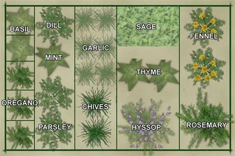 Vegetable Garden Layout Template Culinary Herb Garden Herb Garden Layout