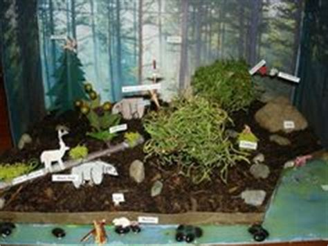 Rainforest Shoo 1000 images about woodland forest diorama project 2nd grade on dioramas woodland
