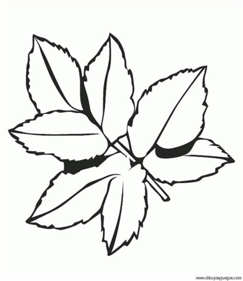 imagenes para colorear hojas imagenes de hojas de arbol para colorear imagui