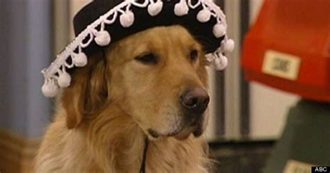 dog on full house here s what happened to your favorite tv animals huffpost