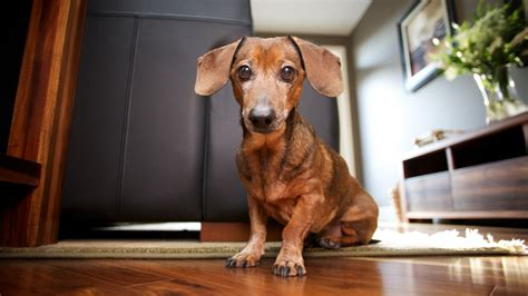 how to eliminate dog odor in the house help my friends say my house smells like a dog