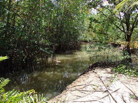 los bosques ibericos practicos sistemas de manejo sostenible para los bosques nativos tropicales secundarios y degradados del