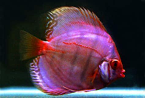 aquarium fish list ornamental fish export al aquariumcom part