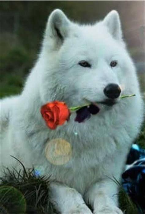 imagenes goticas de lobos esp 237 ritu de lobo amazing images pinterest