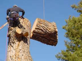 Tree Service In Tree Removal Techniques In Arlington