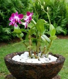 orchids on pinterest growing orchids orchid terrarium
