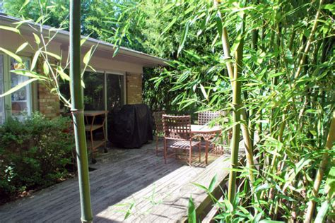 bamboo in backyard how quot not quot to sell your home plant a little bamboo