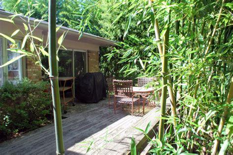 invasive plants not yard friendly grayson south